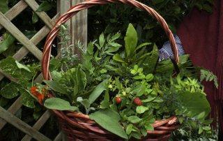 greta's herbs